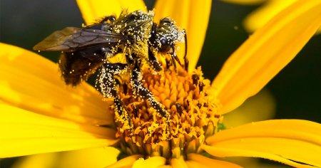 Цветочная пыльца: чем полезна и как применять?