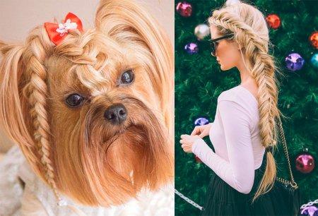 Новогодние прически, которые точно понравятся собаке