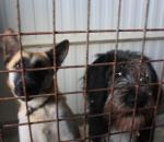 Брошенные хозяевами: фоторепортаж из собачьего питомника в Вологде