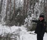 В Бабушкинском районе полиция задержала мужчину, спилившего 18 деревьев